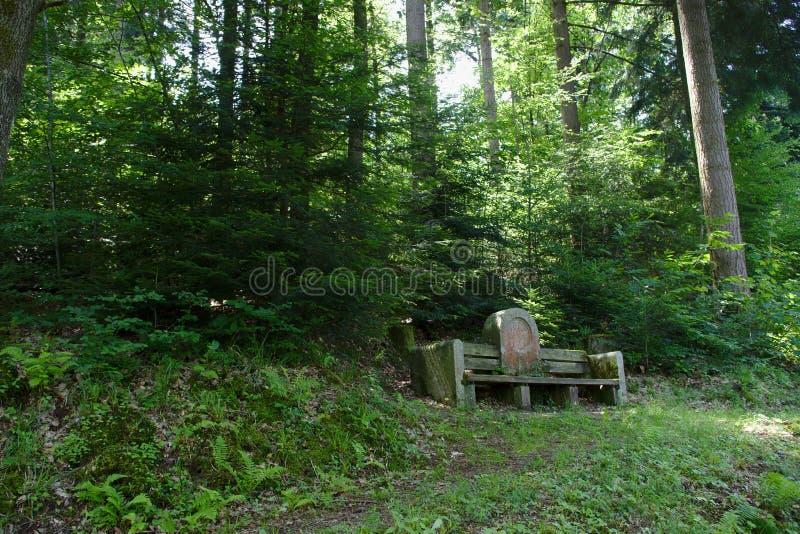 Banco di pietra nella foresta nera, Germania fotografia stock libera da diritti