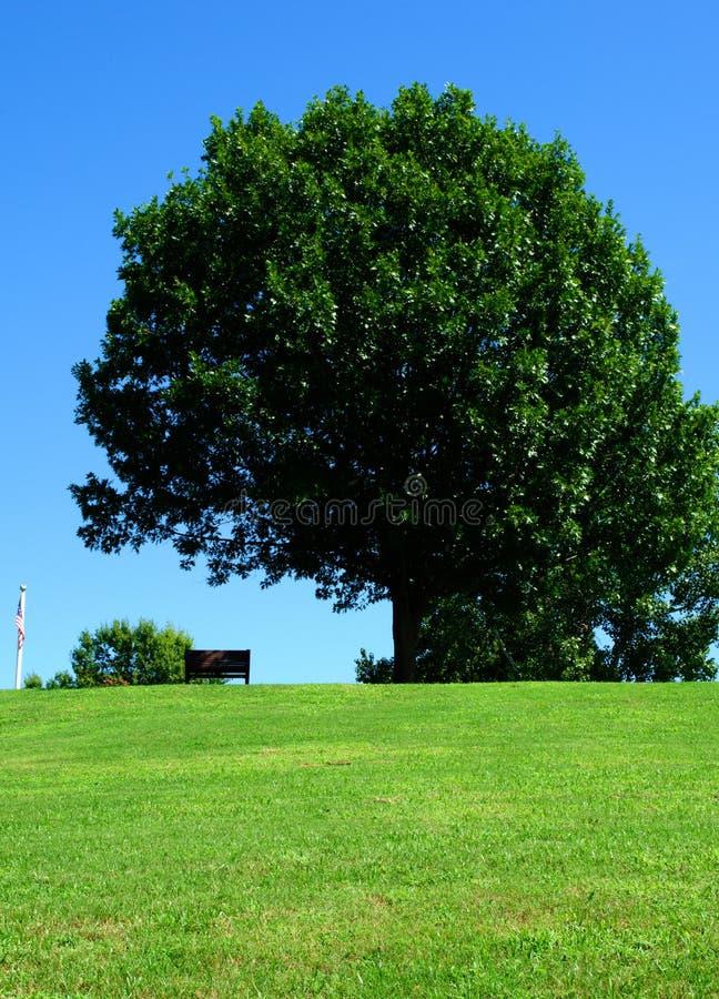 Banco di sosta sotto l'albero verde fotografia stock