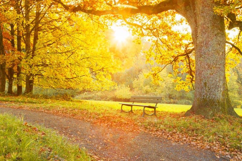 Banco e árvore em um trajeto em um parque fotos de stock royalty free