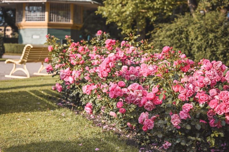 Banco e fiori di arte di mattina in un parco inglese Foglia, bellezza immagini stock libere da diritti