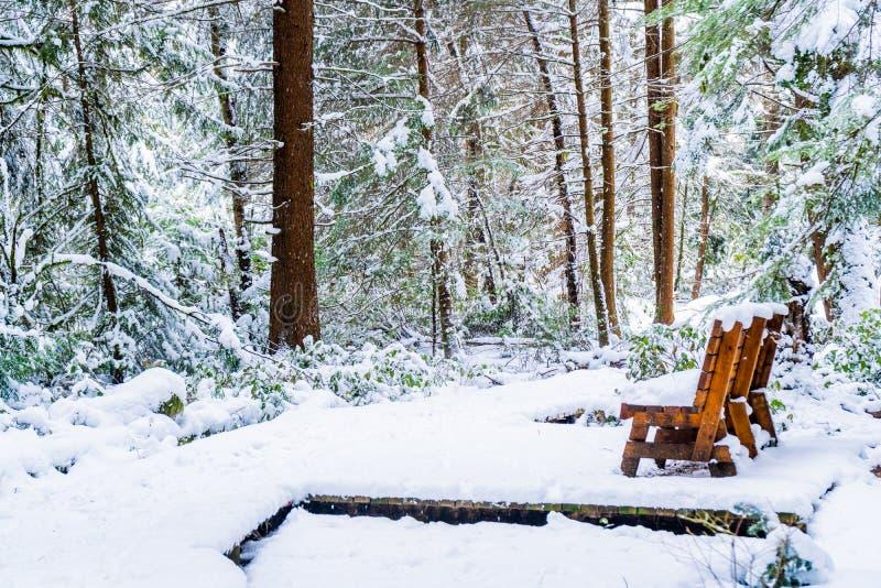 Banco em uma floresta nevado, em uma fuga de caminhada, após uma tempestade de neve no delta de Vancôver BC, no pântano das queim foto de stock