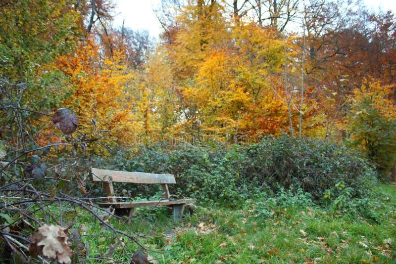 Banco en bosque durante el otoño foto de archivo