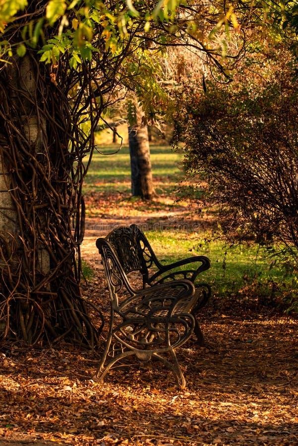 Banco en el parque de Herastrau en el tiempo del otoño, humor romántico, Bucarest Rumania imagen de archivo