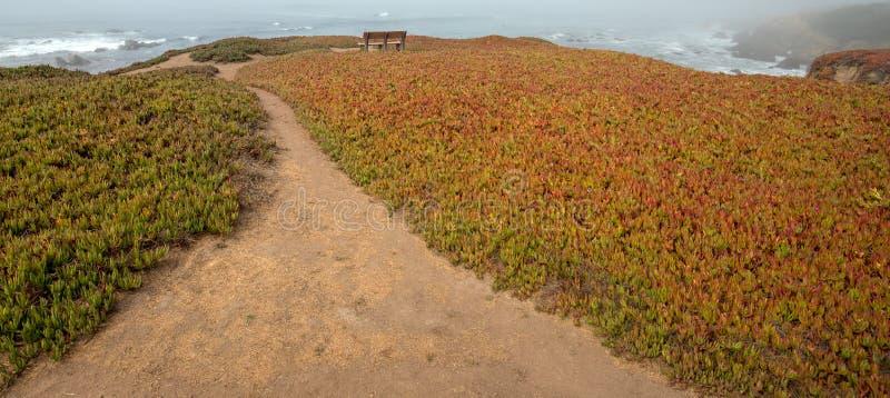 Banco en peñasco rodeado por la planta de hielo en rastro del peñasco en la costa costa central rugosa de California en Cambria C imagen de archivo libre de regalías