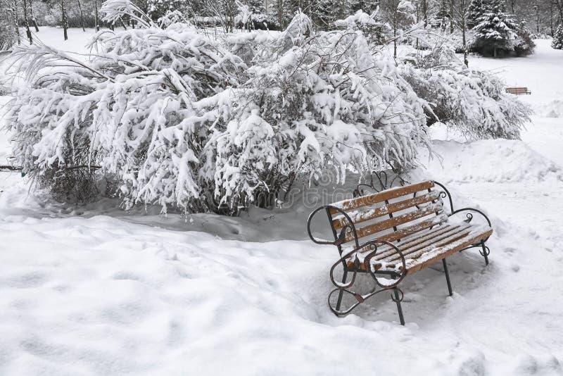 Banco innevato nel parco della città al giorno di inverno fotografia stock libera da diritti