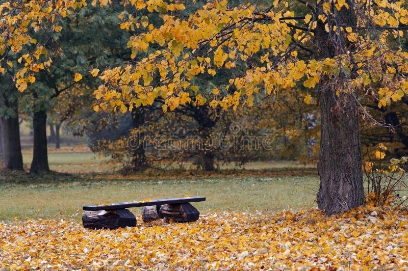 Banco na paisagem do outono fotos de stock