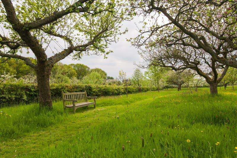 Banco nel giardino del frutteto fotografie stock libere da diritti