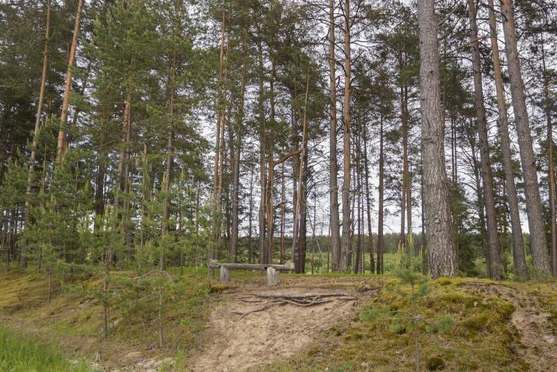 Banco nella foresta fotografie stock libere da diritti