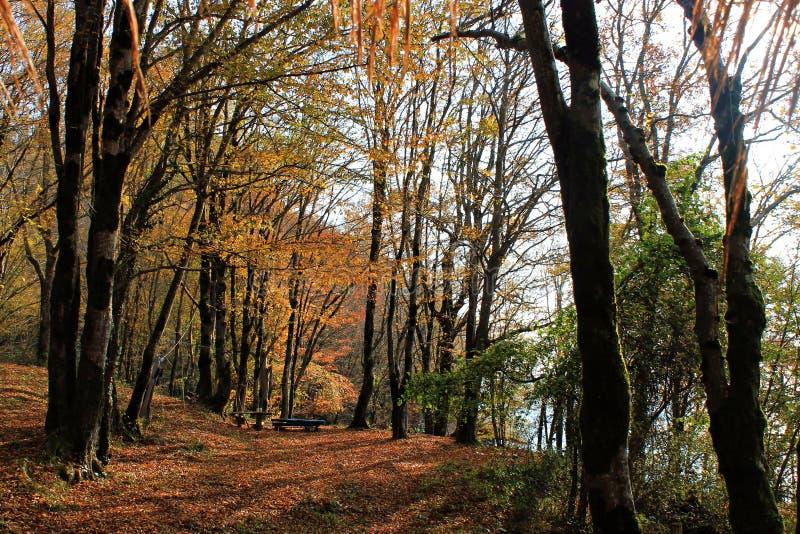 Banco no bosque do outono imagem de stock