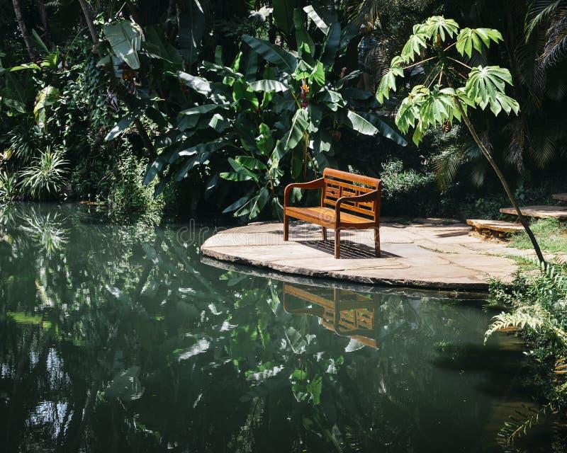 Banco no mais florest tropical imagem de stock royalty free