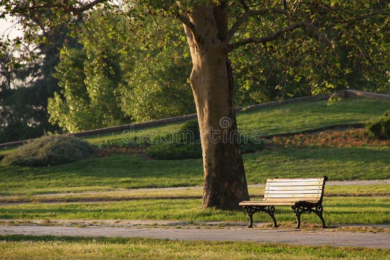 Banco no parque fotografia de stock royalty free
