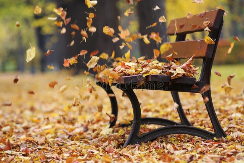 Banco no parque do outono foto de stock