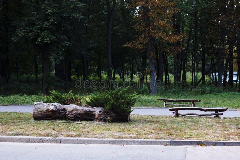 Banco no parque do outono Autumn Landscape fotos de stock royalty free