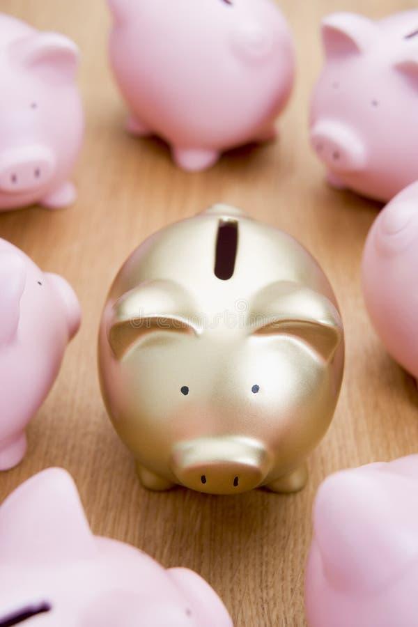 Banco Piggy dourado entre muitos cor-de-rosa imagem de stock