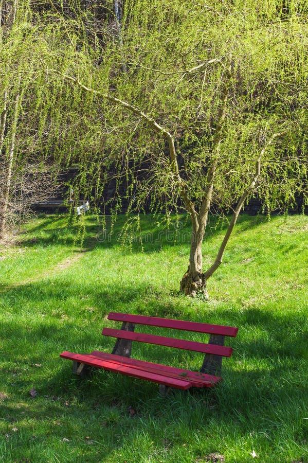 Banco rosso di legno sotto gli alberi nel parco immagini stock