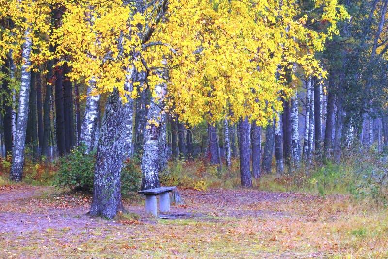 Banco solo en Autumn Forest imágenes de archivo libres de regalías