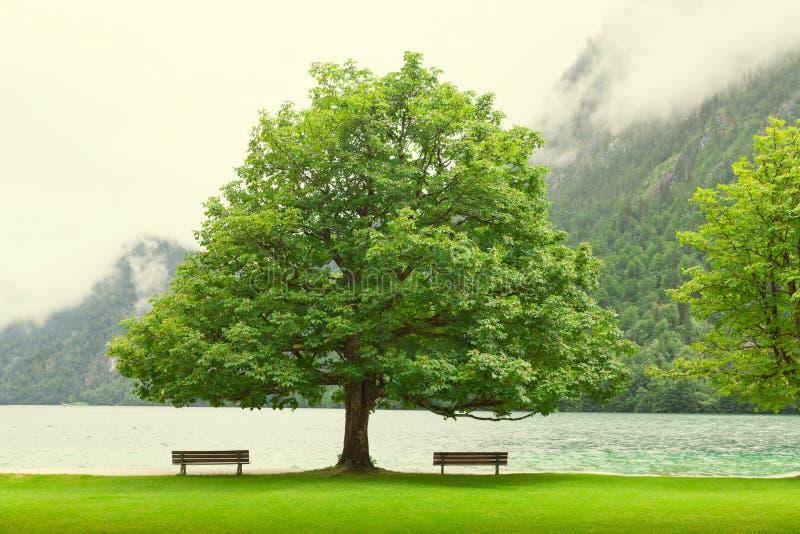 Banco vacío en el lago de la montaña del otoño Costa conforme al mou doblado del árbol foto de archivo