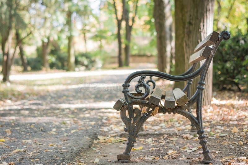 Banco vazio de madeira no parque do outono, paisagem do outono foto de stock royalty free