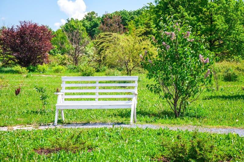 Banco vazio no parque foto de stock royalty free