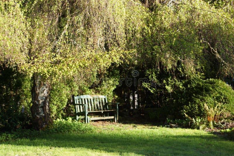 Banco verde na luz solar abaixo de uma árvore de amieiro chorando imagem de stock