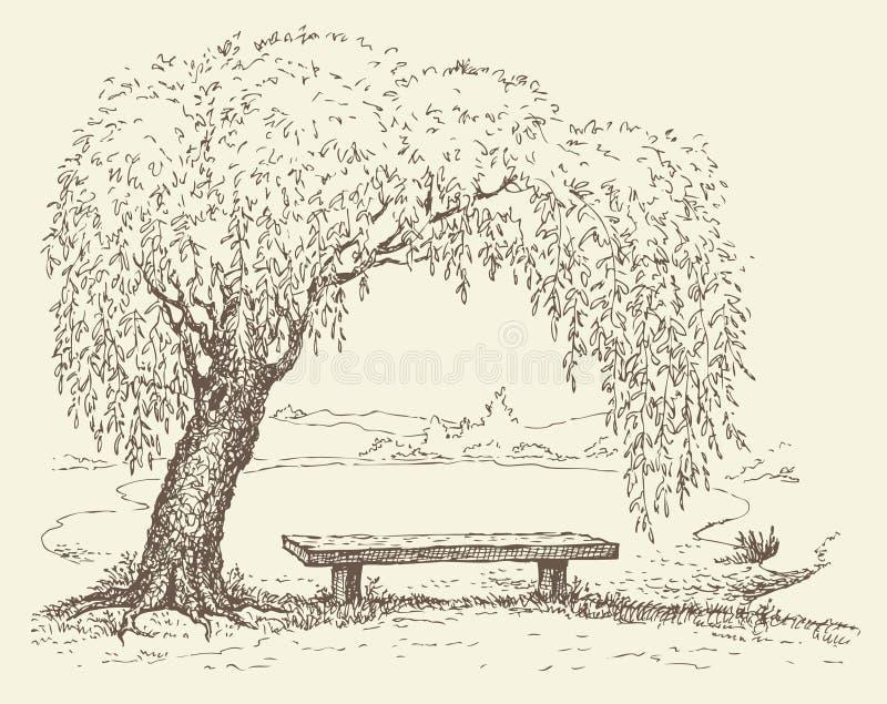 Banco viejo bajo un árbol de sauce por el lago stock de ilustración