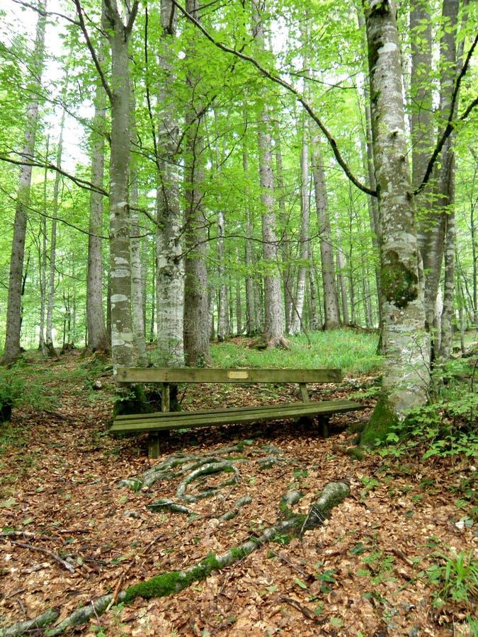 Banco viejo en bosque imagen de archivo