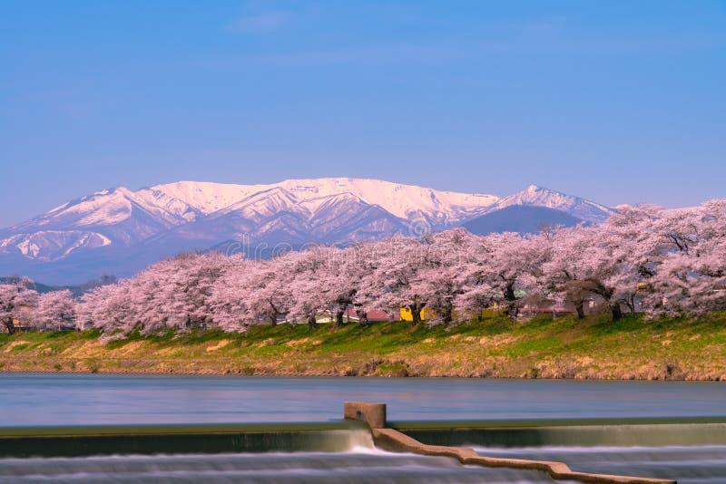Bancos de Cherry Trees Along Shiroishi River em Miyagi, Tohoku, Japão imagens de stock royalty free