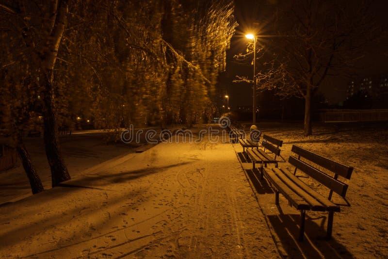 Bancos de parque congelados en la noche fotografía de archivo libre de regalías