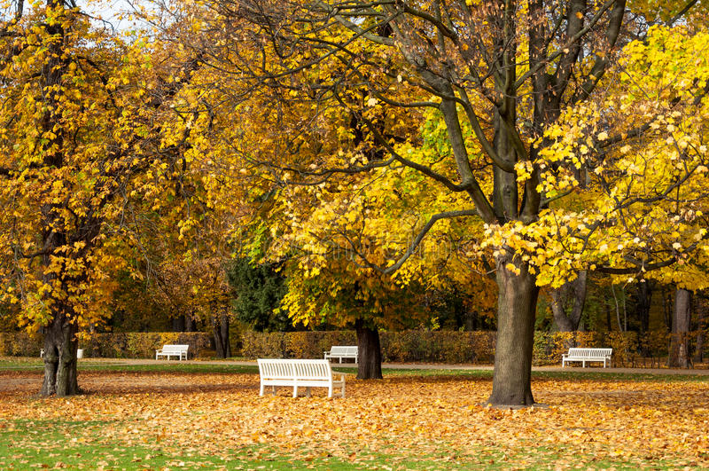 Bancos de parque del otoño imágenes de archivo libres de regalías