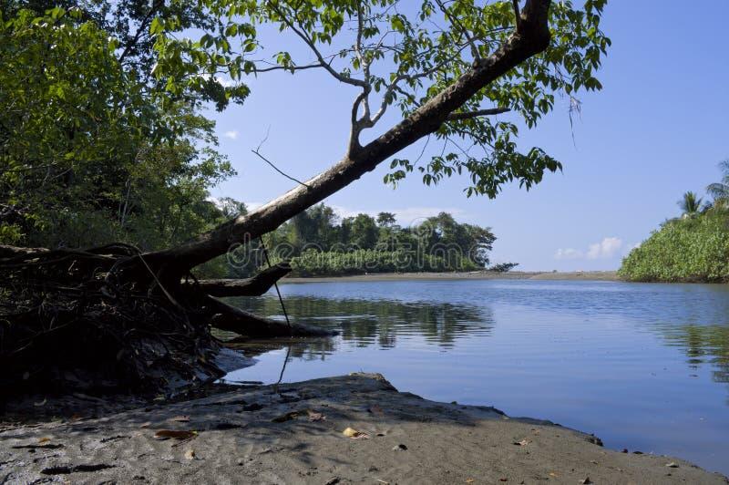 Bancos de rio de Sirena no parque nacional de Corcovado fotografia de stock