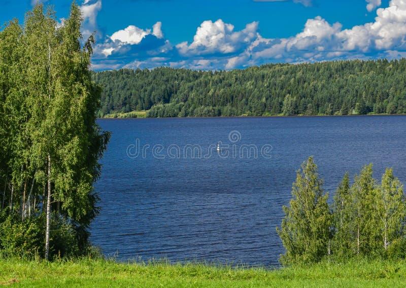 Bancos del bosque en el río Volga imagenes de archivo