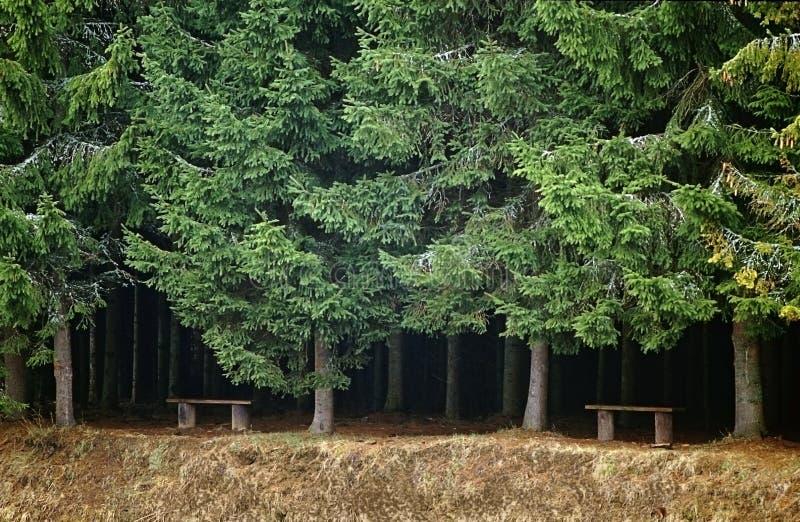 Bancos na borda de uma floresta fotos de stock