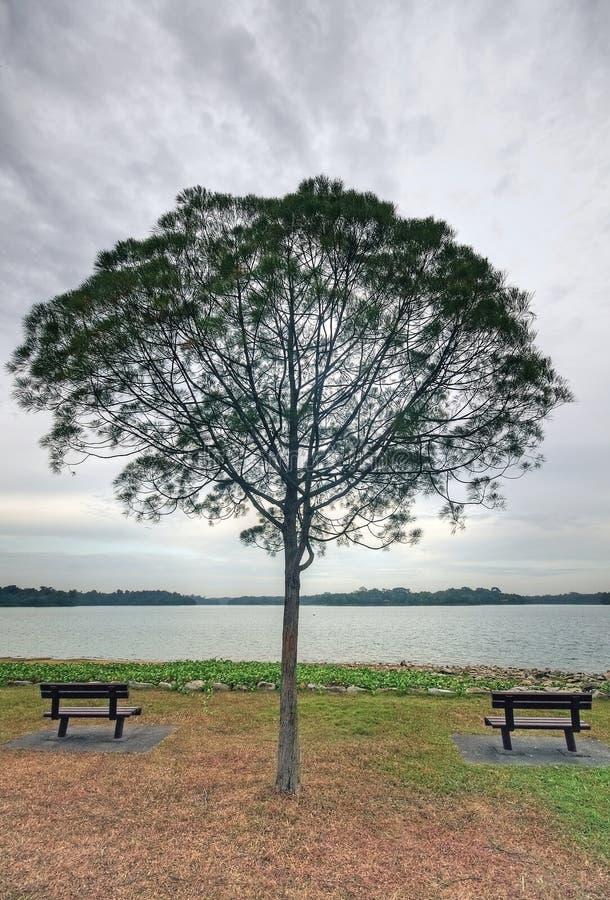 Bancos vazios e uma árvore fotografia de stock royalty free
