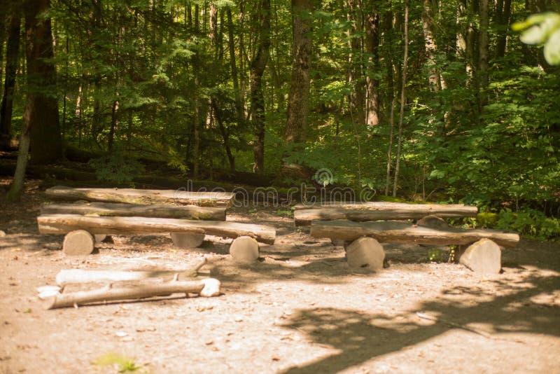 Bancs de rondin dans la forêt photo libre de droits