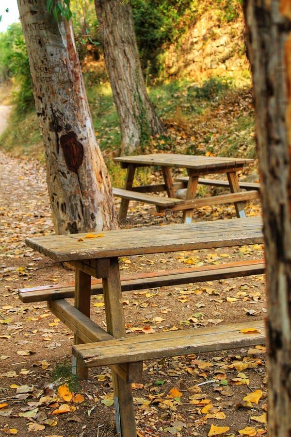 Bancs en bois dans la forêt photo libre de droits