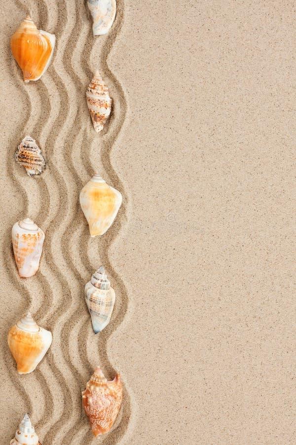 Band av snäckskal som ligger på sanden royaltyfria foton