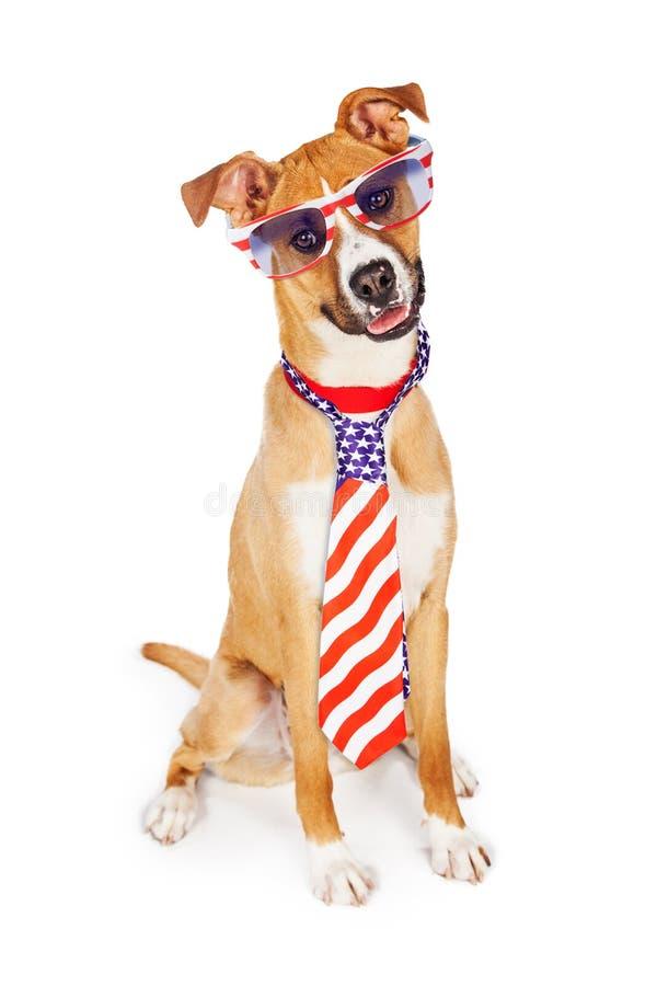 Band och exponeringsglas för patriotisk amerikansk hund bärande royaltyfria bilder