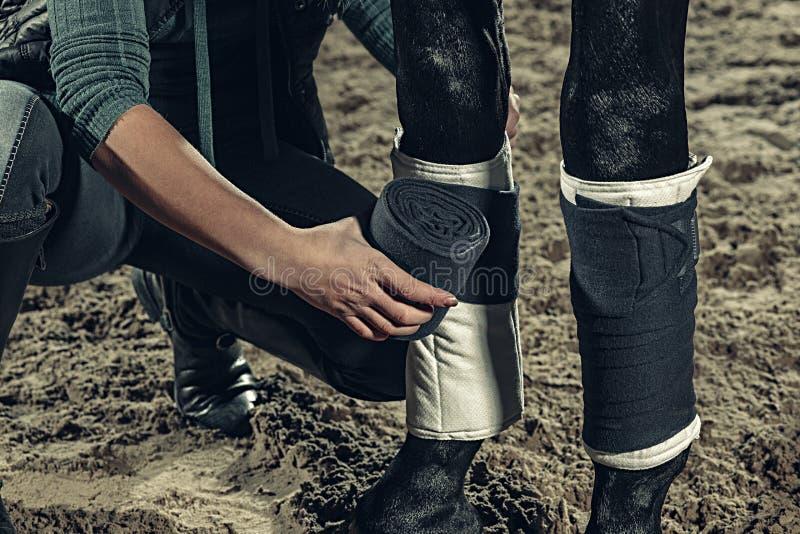 Bandage des jambes de ` de chevaux avec un bandage photo stock