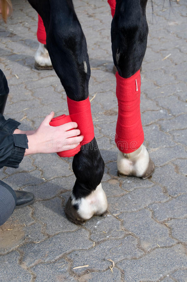 Bandage des pattes des chevaux. photos stock
