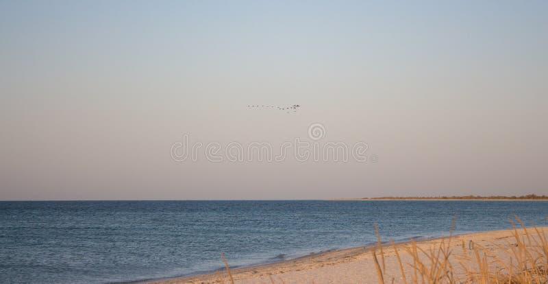 Bande d'oiseaux au-dessus de la mer Plage vide Concept tropical de voyage Bord de la mer au lever de soleil photographie stock