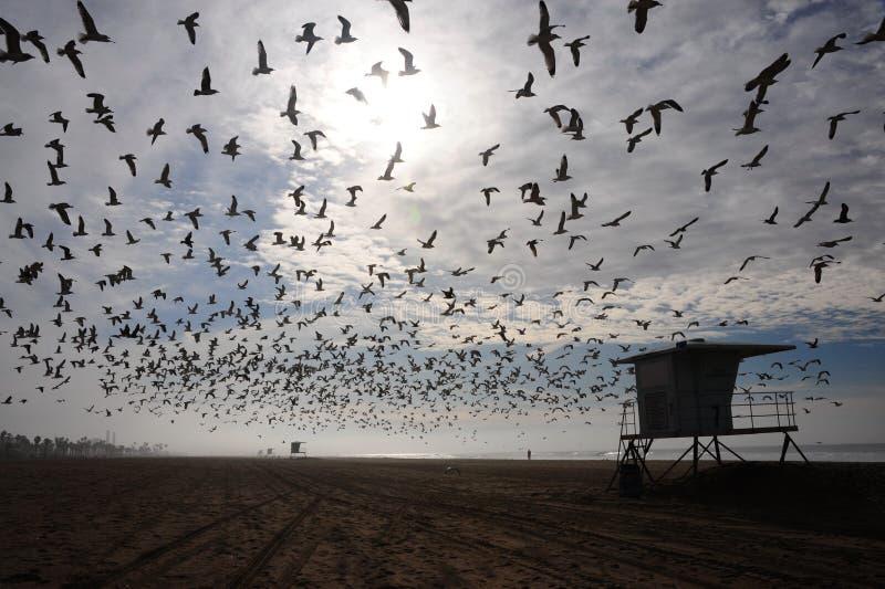 Bande d'oiseaux au-dessus de plage image stock