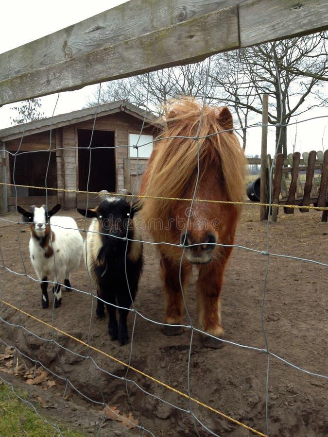 Bande de bric et de broc des animaux photos libres de droits