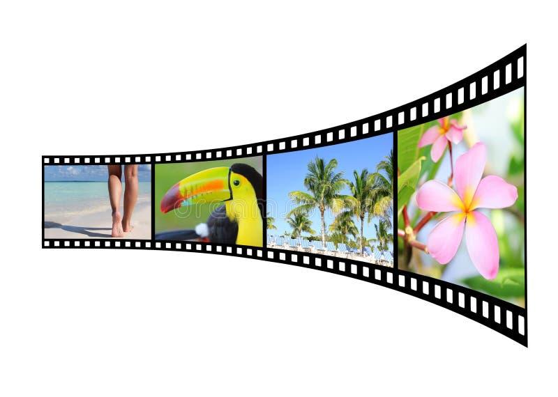 Bande de film avec des photos de nature tropicale images libres de droits