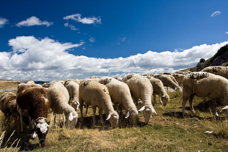 Bande de moutons images libres de droits