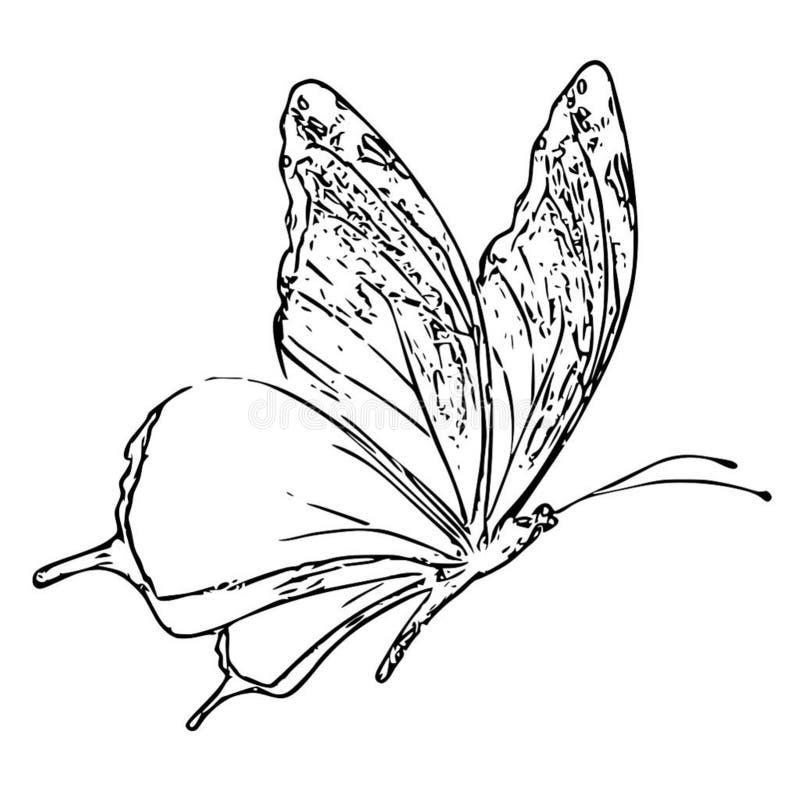 Bande dessinée blanche de croquis de noir adulte de livre de coloriage de papillon illustration libre de droits