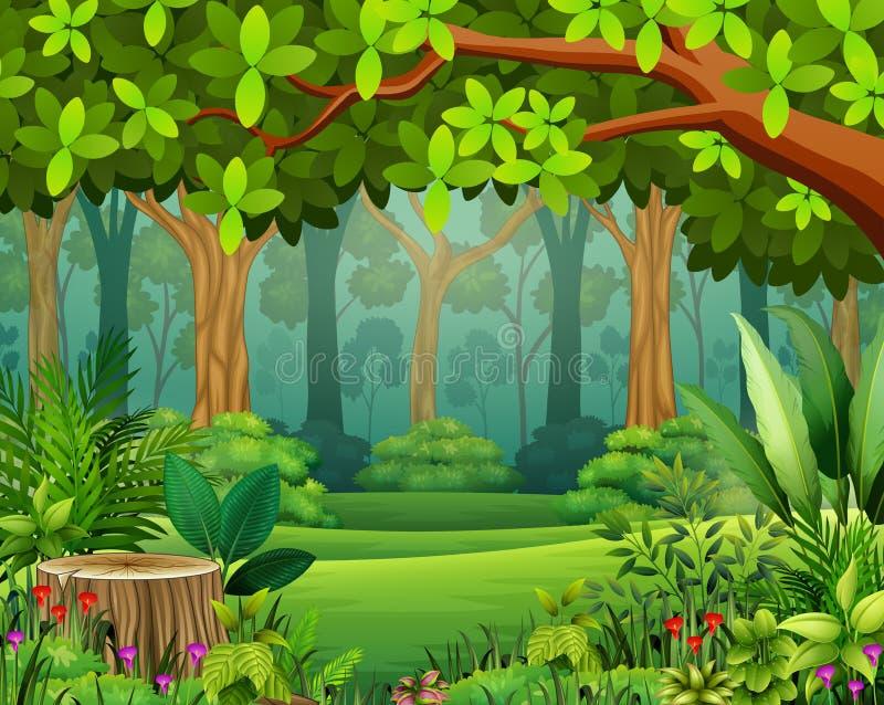 Bande dessinée de forêt de paysage de vert au printemps illustration libre de droits