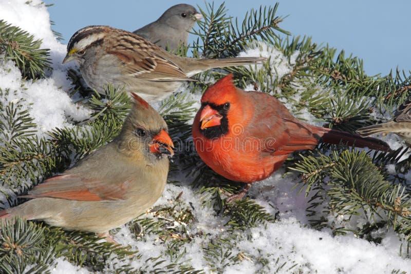 Bande mélangée d'oiseaux photos libres de droits