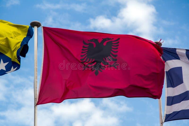 Bandeira albanesa que fliying no vento fotos de stock royalty free