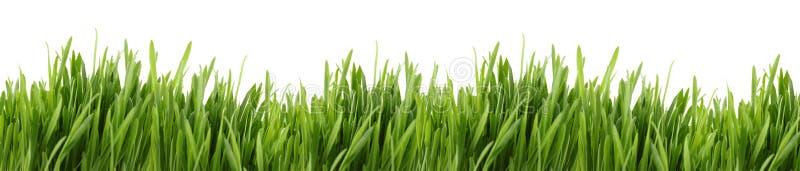 Bandeira alta da grama