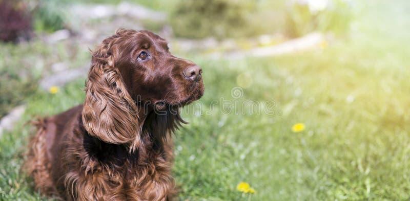 Bandeira bonito do cão imagens de stock royalty free